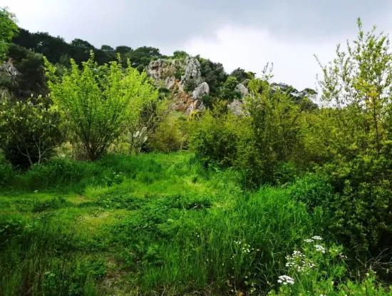 Güzelyurt Zum Verkauf Gärten Granatapfel Ta