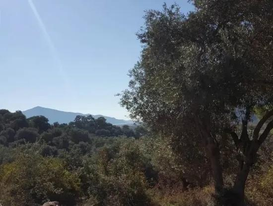 Suitable Land For Investment For Sale In Dalyan