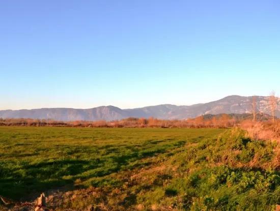 Urgent Land For Sale In Ula Karabogurtlen Bargain