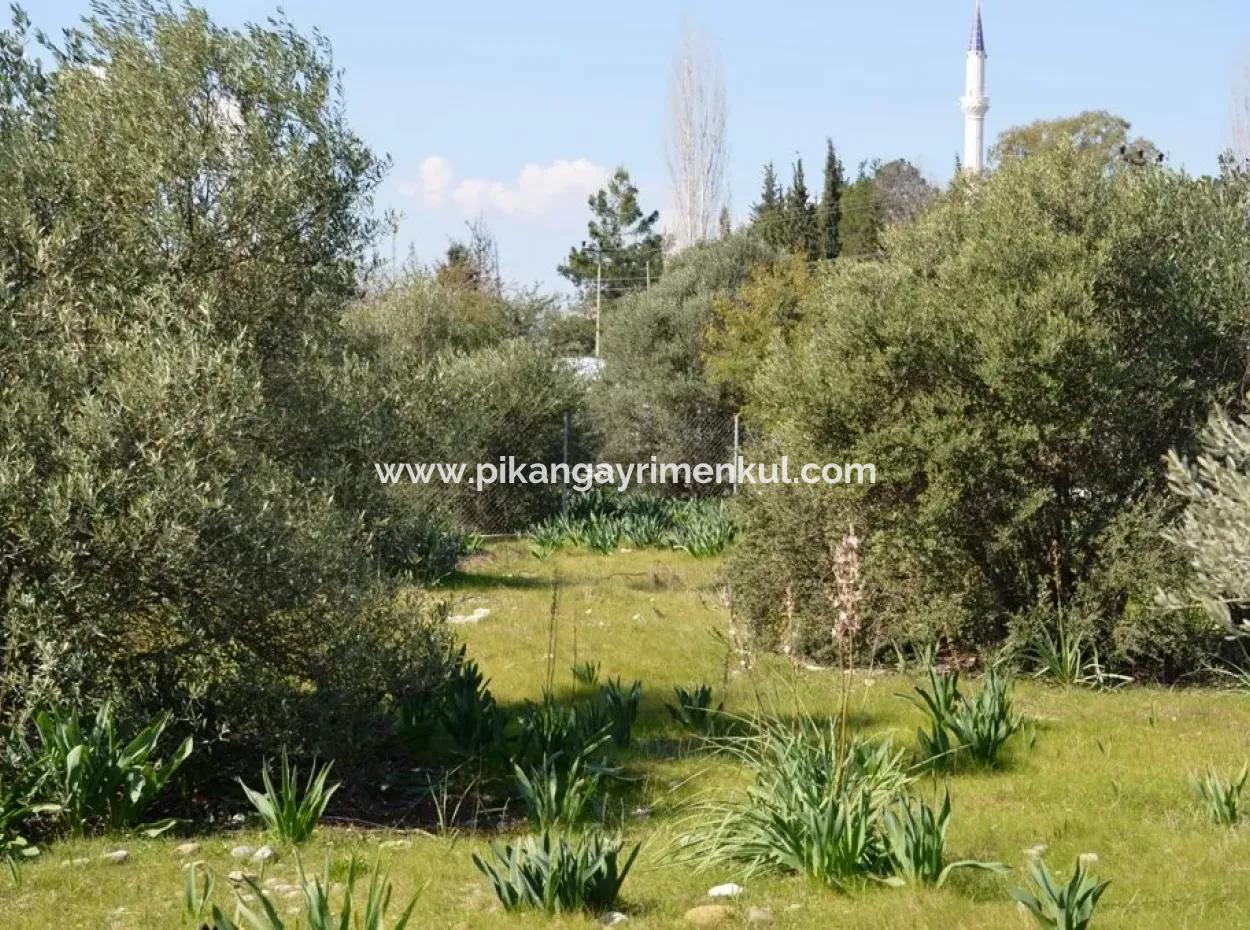 Ortacada Satılık Kelepir Villa Arsası