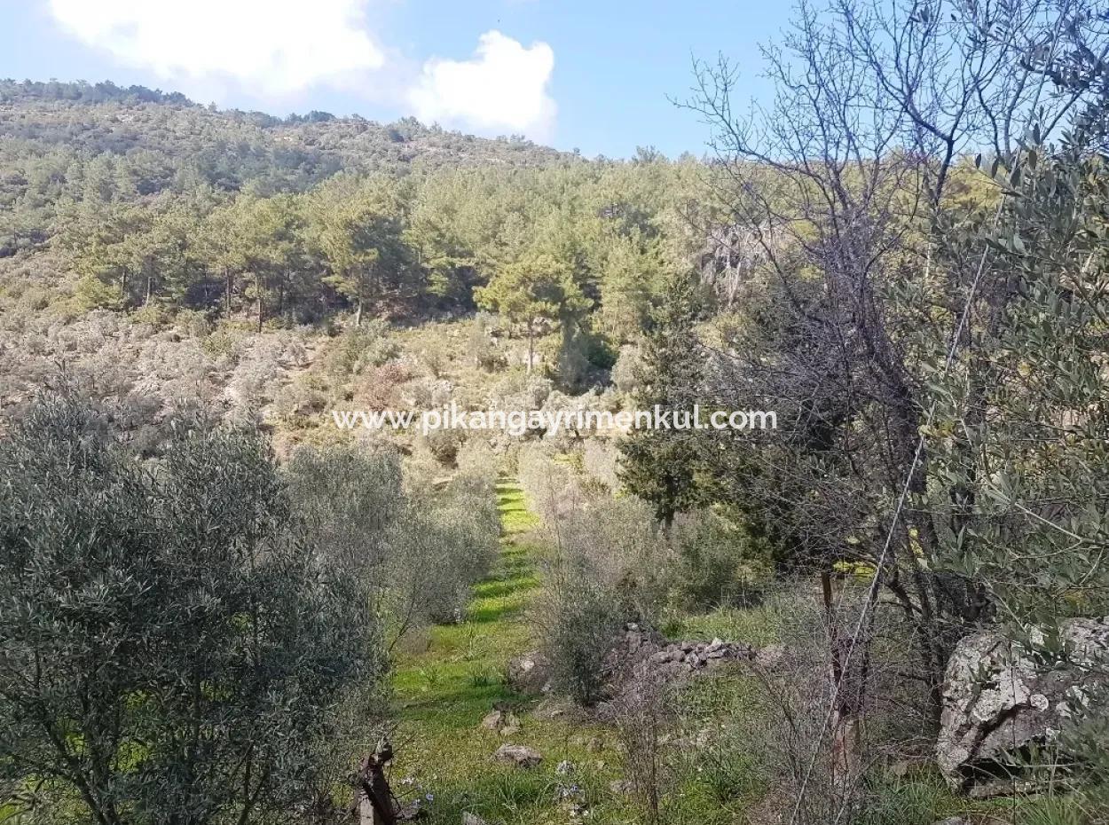 Dalaman Şerefler Kırcagedrede Satılık Arazi
