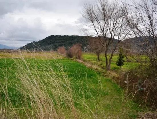 Ortaca Güzelyurtta Sarıgerme Yoluna Sıfır Satılık Arazi
