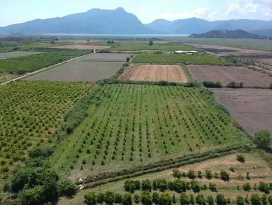 Ortaca Tepearası Nda 13 700 M2 Kelepir Arazi Satılık