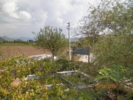 Ortaca Eskiköy De Satılık Organik Tarım Sertifikalı Çiftlik 12 000 M2