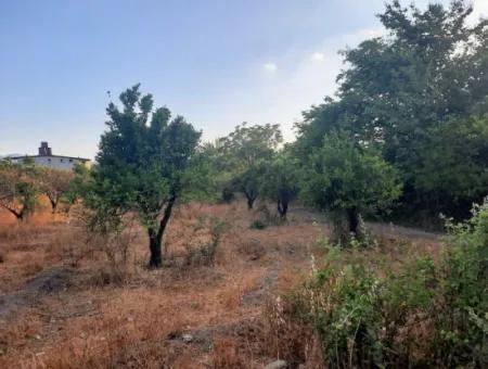 Köyceğiz Toparlarda Satılık 1080 M2 İmarlı Arsa