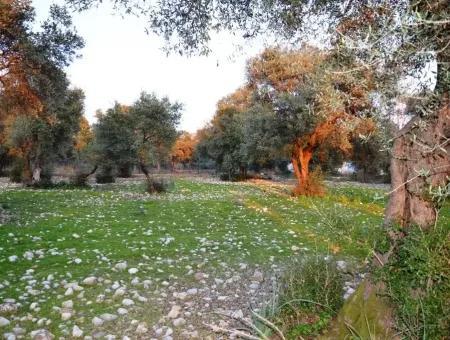 Zeytinalanı Nda Satılık Göl Manzaralı Arazi