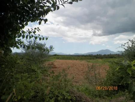 Köyceğiz Yangıda 9406 M2 Verimli Tarla Satılık